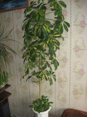 Растения для украшения интерьера