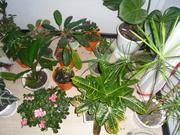 укорененные черенки комнатных растений, 8000