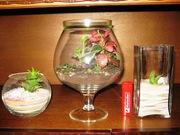 Растения в стекле
