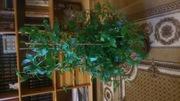 декоратиные комнатные растения